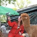 Alpacateam uut Lemelerveld volop in het nieuws