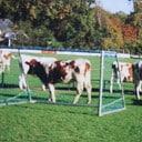 Voetbalvereniging Hoonhorst kiest voor koeien