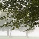 Een prachtige mistige zondagmorgen ….