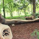 Dalfsenaar maakte kunstwerk van oude boom