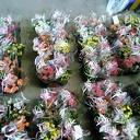 Zonnebloem zet haar gasten in de bloemetjes