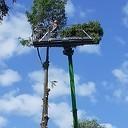 Hoge boom kopje kleiner gemaakt