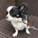 Hondje gevonden in de van Ommenhof