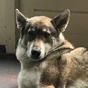 Hond Joy vermist en ook weer terug