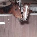 Met spoed ruimte gevraagd voor paarden 't Olde manegepeerd