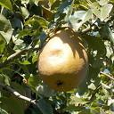 Ook de fruitbomen staan er nu prachtig bij