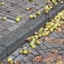 De appel valt niet ver
