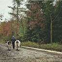Koeien op stal