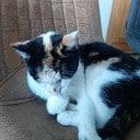 Katten vermist en gewond rondom Vossersteeg
