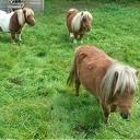 Pony's los, net niet op de Hessenweg