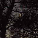De maan scheen door de bomen