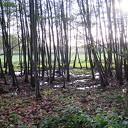 Herfst, ook aan de Mataramweg en Emmertochtsloot