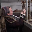 Wie helpt Rika en de paarden uit de brand