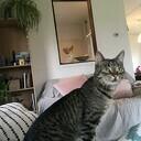 Kat gevonden: Nu na 2 maanden weer thuis!
