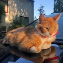 Gemist Rode kat