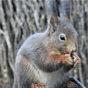Album: eekhoorns de Stuwe