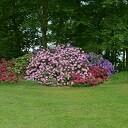 Rododendrons bloeien prachtig bij Kasteel Rechteren