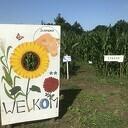 Pluktuin en maïsdoolhof Oudleusen 6 tot 30 augustus bereikbaar