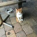 Katje aan komen lopen en weer thuis.