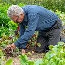 Veel werk bij groentetuin Lindehoeve