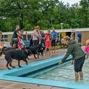 Afsluiten zwemseizoen 2021 met hondenzwemmen