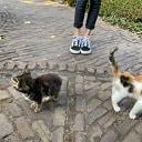 Kittens gevonden en weer thuis