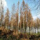 Werken aan klimaatbestendig bos, ook in Dalfsen