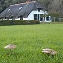 Prachtige paddenstoelen