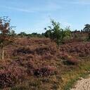 Informatieve Natura 2000-excursie over de Lemelerberg
